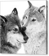 Affection Of Wolves Canvas Print