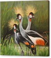 Afrian Crowned Cranes Canvas Print