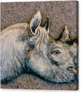 African Black Rhino Canvas Print