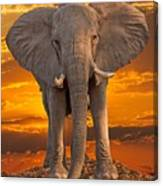 African Bull Elephant At Sunset Canvas Print