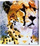 African Cheetah Canvas Print