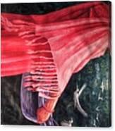 African Damsel Canvas Print