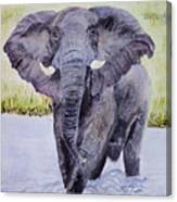 African Elephant Crossing The Chobe River Canvas Print
