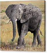 African Elephant Happy And Free Canvas Print
