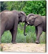 African Elephants Interacting Canvas Print