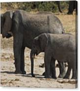 African Elephants Mother And Baby Canvas Print