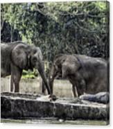 African Elephants_hdr Canvas Print