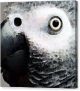 African Gray Parrot Art - Softy Canvas Print