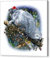 African Grey Parrot A1 Canvas Print