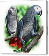 African Grey Parrots A Canvas Print