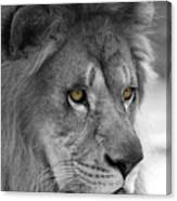 African Lion #8 Black And White  T O C Canvas Print