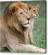African Lion Panthera Leo With Its Cub Canvas Print