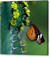 African Monarch On Cactus Canvas Print