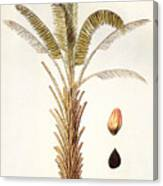 African Oil Palm Canvas Print