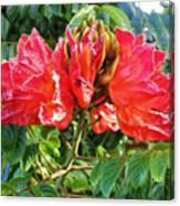 African Tulip Flower #2 Canvas Print