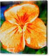 African Violet In Rancho Santa Fe 2 Canvas Print