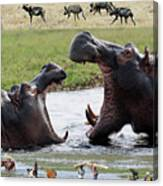 African Wildlife Montage - Hippos Canvas Print