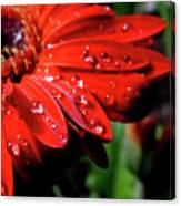 After The Rain Canvas Print
