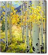 Afternoon Aspen Grove Canvas Print