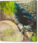 Afternoon Beside The Lane Cove River Canvas Print