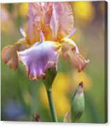 Afternoon Delight. The Beauty Of Irises Canvas Print