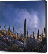 Afternoon Desert Scene Canvas Print