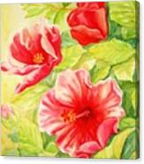 Afternoon Hibiscus Canvas Print