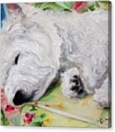 Afternoon Nap Canvas Print