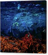 Afternoon On The Reef Canvas Print