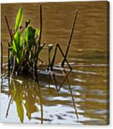 Afternoon Reflections Canvas Print