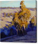 Afternoon Shadows Turon Hills  Nsw Australia Canvas Print