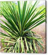 Afternoon Yucca Canvas Print