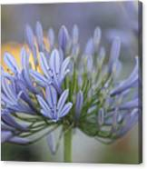 Agapanthus Africanus - Lily Of The Nile 2 Canvas Print