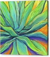 Agave Glow Canvas Print