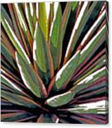 Agave Impressions 1 Canvas Print