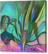Agaves Sous Le Soleil Canvas Print