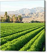 Agriculture In The Desert Canvas Print
