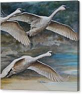 Ahead Of The Storm - Trumpeter Swans On The Move Canvas Print