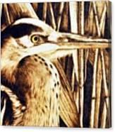 Airone Canvas Print