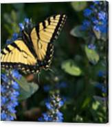 Ajuga With Tiger Butterfly Canvas Print