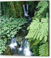 Akaka Falls Stream Canvas Print