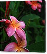 Akeakamai Pua Melia Tropical Plumeria Canvas Print