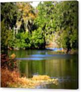 Alafia River Canvas Print