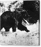 Alaska: Brown Bear Canvas Print