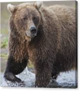 Alaska Brown Bear Upclose Canvas Print