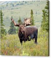 Alaska Monarch #3 Canvas Print