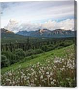 Alaskan Dandelions  Canvas Print