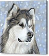 Alaskan Malamute Canvas Print