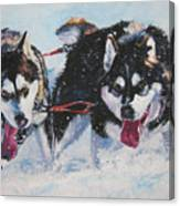 Alaskan Malamute Strong And Steady Canvas Print