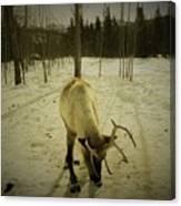 Alaskan Morning Canvas Print